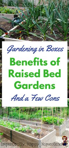 Raised Garden Bed - The Benefits of Gardening in Boxes Gardening in Boxes - Benefits of Raised Bed Gardens for gardening, homesteading, vegetable gardens. And a few cons too.