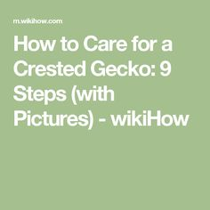 How to Care for a Crested Gecko: 9 Steps (with Pictures) - wikiHow