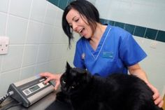 Mini Moo the fat cat with PDSA Vet