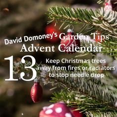 David Domoney's Garden Tips Advent Calendar Day 13
