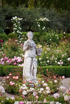 Rosa 'Lady Emma Hamilton' at base of statue focal point in California flower garden with formal room of English (Austin) roses