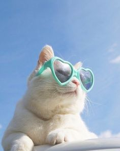 Shades a woke cats cat kitty kitties kitten sillykitty weirdcat funnycats drakebell fluffycat Animals And Pets, Baby Animals, Funny Animals, Cute Animals, I Love Cats, Crazy Cats, Cool Cats, Cat Aesthetic, Beautiful Cats