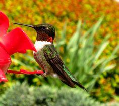 Vivid Hummingbird Photo Print