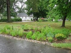 1000 Images About Rain Gardens On Pinterest Rain Garden