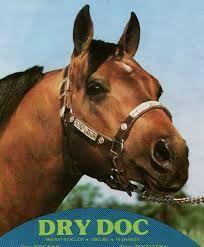 dry doc quarter horse - Google Search