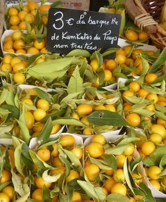 Lush Kumquats in the market at Nice, South of France Nice France, South Of France, Provence, Nice Photography, Us Travel, French Country, Belgium, Lush, Kitchens