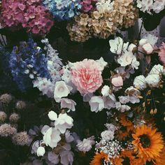 Flowers / photo by Rachel Sulman)
