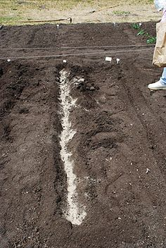 Great section on growing potatoes. Start A Vegetable Garden