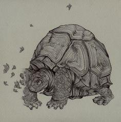 Google 搜尋 http://scene-blog.com/wp-content/uploads/2011/02/tortoise.jpg 圖片的結果