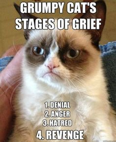 Grumpy cat, grumpy cat meme, grumpy cat humor, grumpy cat quotes, grumpy cat funny …For the best humour and hilarious jokes visit cat Grumpy Cat Quotes, Meme Grumpy Cat, Gato Grumpy, Grumpy Kitty, Funny Shit, Funny Cats, Funny Animals, Cute Animals, Funniest Animals