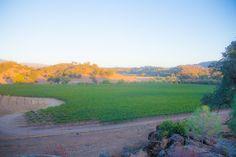 Vintage Cowboy winery in Pozo, CA