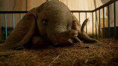 'Dumbo' de Disney estrena un adorable nuevo trailer
