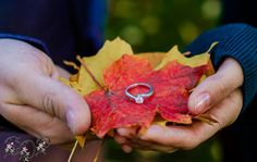 Fall engagement by Elegant-Dreams Photography