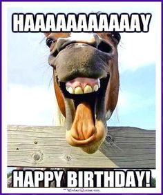ideas for funny happy birthday cat dogs Birthday Memes For Men, Happy Birthday Wishes For A Friend, Funny Happy Birthday Images, Wish You Happy Birthday, Birthday Wishes Funny, Happy Birthday Sister, Card Birthday, Birthday Greetings, Birthday Ideas