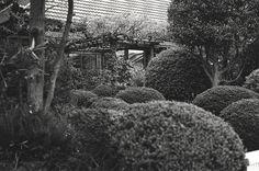 庭 (The garden)