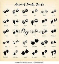 Animal tracks - foot
