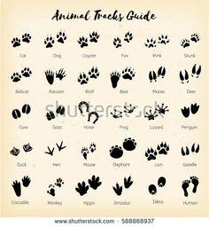Animal tracks - foot
