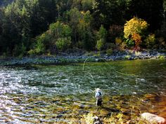Wenatchee River Fishing Report | Red's Fishing Report and Blog
