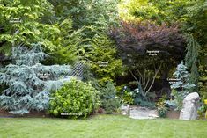 7 Ways to Use Conifers in the Garden: Conifers provide the garden with incredible form, color and texture in every season. Learn one expert's secrets to designing with these evergreens. Trees And Shrubs, Trees To Plant, Potted Trees, Conifer Plants, Evergreen Landscape, Garden Design Plans, Border Plants, Plant Guide, Forest Garden