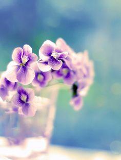 Woodland violets, the official flower of Alpha Delta Pi (: <>