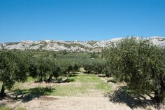 Biking through the olive groves in southern France