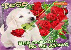Тебе розы без повода, но от души!
