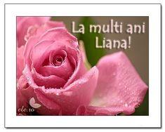 Liana - Sfantul Ilie - Felicitari - Ele.ro Rose, Flowers, Plants, Pink, Plant, Roses, Royal Icing Flowers, Flower, Florals