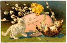 Postcard U s 1907 Easter Greetings with Cats and Baby Chick