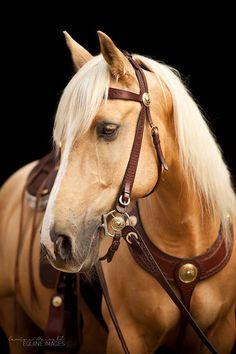 Beautiful Palomino horse, just dreamy!