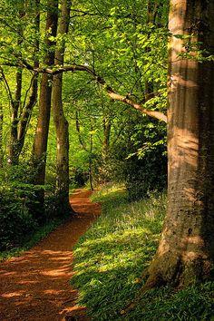 Wayford Woods, Somerset, England. Such a serene & naturally beautiful place!