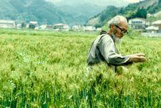 masanobu-fukuoka-agricultura-natural