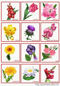lotto kwiaty 2