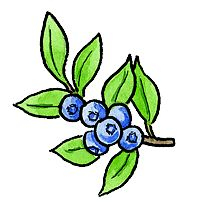 Information to grow Blueberries in your New England Home garden.