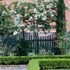 Front Yard- Crape Myrtle trees give the pop! of color in a landscape; shown in white, Crape Myrtles are available in a wide range of pinks, purples & red.  This easy-care gem of a tree has interesting patches of peeling cinnamon-color bark and clusters of flowers lasting well into the summer.  I really like the rows of  boxwood hedges too; formal and easy care. #bhg.com