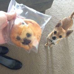 Nice look, doggy…