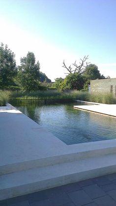 Natural Swimming Pools, Swimming Pools Backyard, Swimming Pool Designs, Pool Landscaping, Pool Landscape Design, Pond Design, Mod Pool, Outdoor Pool, Outdoor Gardens