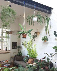 3,018 отметок «Нравится», 56 комментариев — Jamie Song (@jamies_jungle) в Instagram: «Did a bit of midnight rearranging of my favourite rainforest cacti hanging from the steel beam..…»