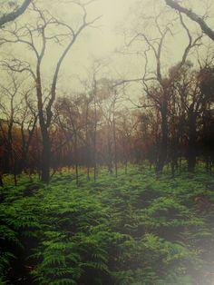Misty Woods Art Print #artprint #misty #woods #nature #society6