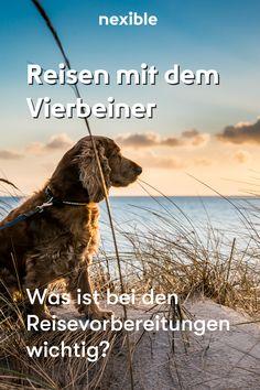 Du verreist mit deinem Hund? Wir haben tolle Tipps von einer Reisebloggerin für dich. Anja hat einige Erfahrungen durch das Reisen mit ihrem Hund Buddy. Reisetipps mit Hund. Jetzt lesen. #hund #reisen Am Meer, Roadtrip, Movies, Movie Posters, Dog Travel, Travel Advice, Amazing, Reading, Films