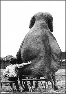 LOVE this picture love this book... Modoc The Greatest Elephant Who Ever Lived!!   Boy & Elephant Buddy, 1982.  Photo by Mike Hollist.  World Press Photo Foundation.  Postcard.