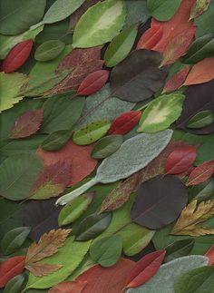 20558 Leaves by horticultural art, via Flickr