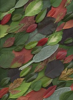 20558 Leaves by horticultural art, via Flickr