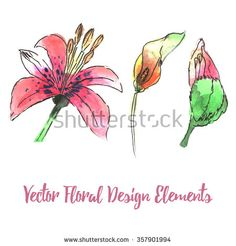 Collection of watercolor an ink floral design elements isolated on white background for Wedding Invitations, Anniversary, Save the Date, Baby Shower, Mothers Day, Valentines Day, Birthday and more. - stock photo