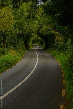 Road surronded by greenery in the north-west of Ireland by Guille Faingold
