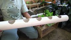 This would be great way to grow your own kitchen herbs. - This video is in Spanish, but you'll get the gist of it. It shows how to make a vertical hanging garden for urban spaces. Inexpensive materials like PVC pipe and 2-liter soda bottles can turn any sunny wall into growing space.