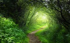 autumn forest - Google Search