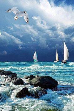 Deniz ve martı