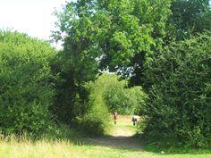 Arrandene Open Space Park in London #London #stepbystep