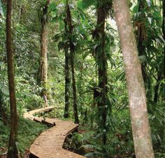 forêt tropicale - Guadeloupe