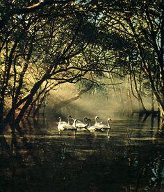 Лебединое озеро | Николай Бохонов